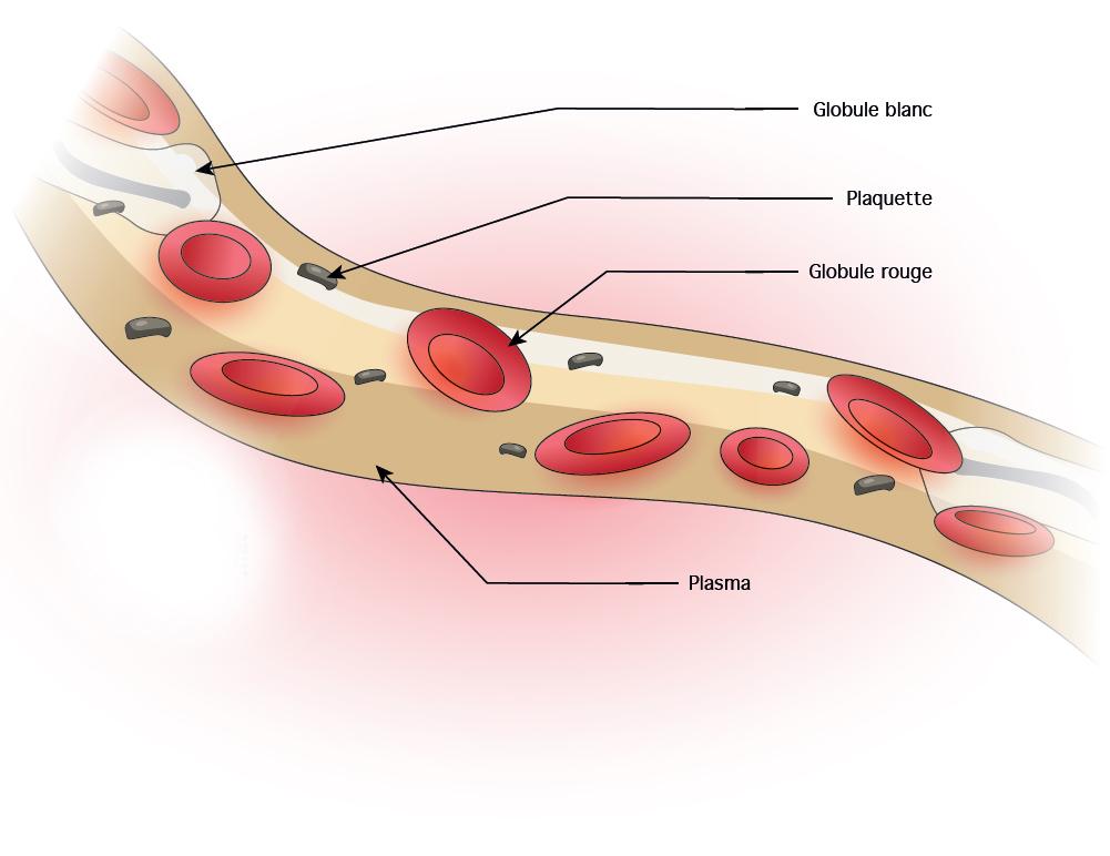 manque leucocytes conséquences