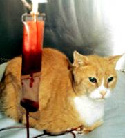 transfusion.chat